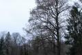 alcsuti_arboretum_hovirag_18