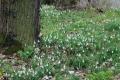alcsuti_arboretum_hovirag_6