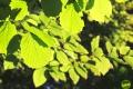 sarvari_arboretum_gribek_timea_01