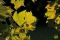 sarvari_arboretum_gribek_timea_07