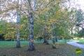 sarvari_arboretum_gribek_timea_08