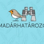 madarhatarozo_app_cl