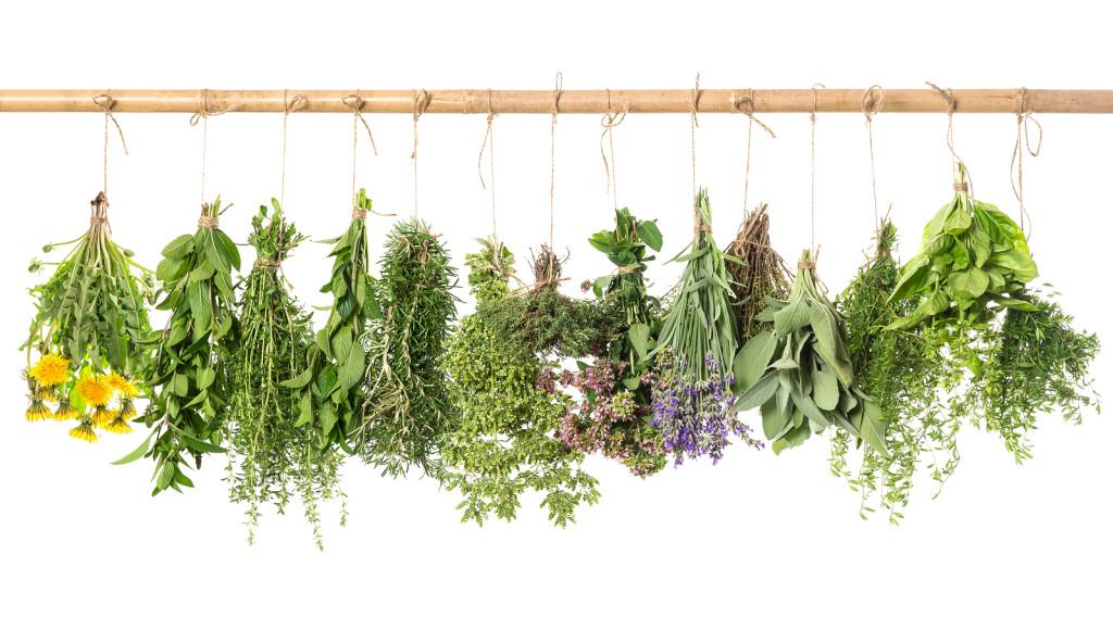 fresh herbs hanging isolated on white background. basil rosemary sage thyme mint oregano marjoram savory lavender dandelion