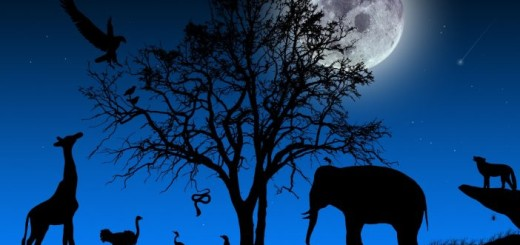 african-wallpaper-night-landscapes-animals-4269-702x336