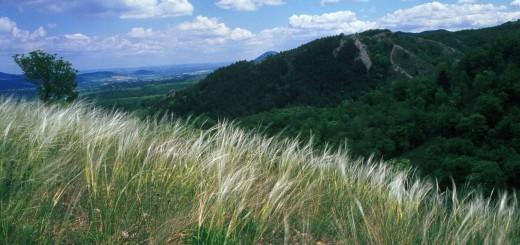 Szénások (fotó: Kalotás Zsolt)