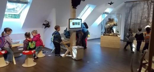 kohalmy_vadaszati_muzeum_40