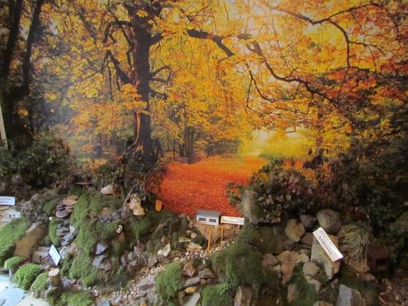 Részlet A mi erdőnk kiállításról (Fotó: Mentusz Károly)