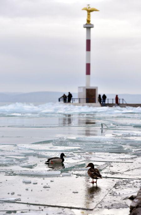 Madarak jégtáblákon a siófoki móló közelében 2017. január 4-én - MTI Fotó: Máthé Zoltán