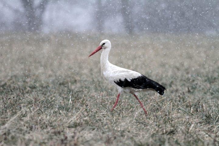 (Fotó: Duna-Ipoly Nemzeti Park Igazgatóság)