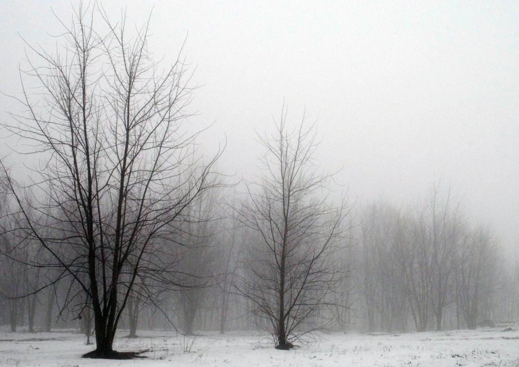 köd_s
