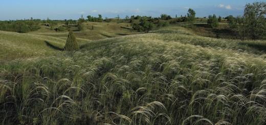 Kép forrása: Kiskunsági Nemzeti Park Igazgatóság