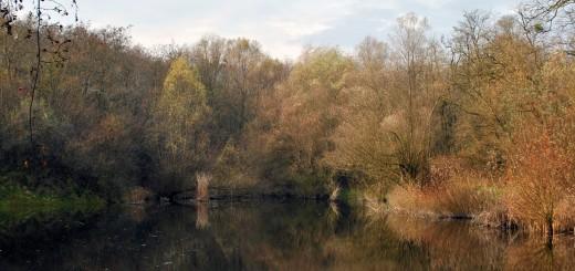 A pilisszentiváni Jági-tó (Fotó: Gribek Tímea - Erdeiprogramok.hu)