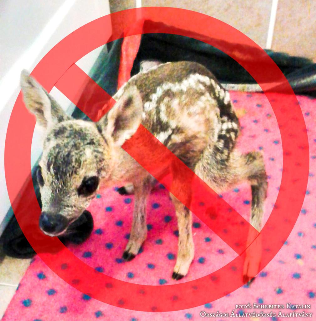 Ne vidd haza a gidát, borjút! (fotó Schreiter Katalin, Országos Állatvédőrség Alapítvány)