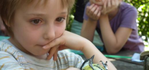 iz_madar-gyerek1
