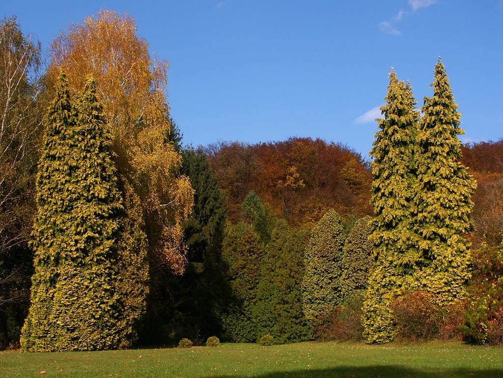 Csácsbozsoki Arborétum (Fotó: Zalaerdő Zrt.)