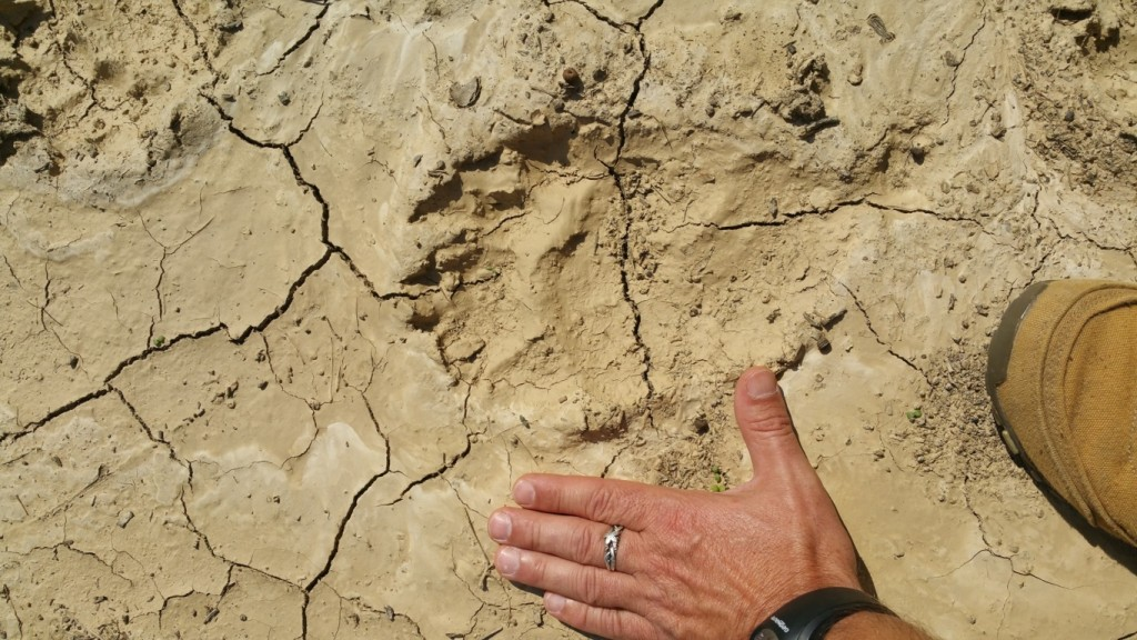 Nyomokat találtak a területen (Fotó: Szabó Ádám, ANPI)